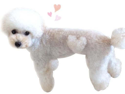 結婚指輪に彫刻した愛犬140907-2