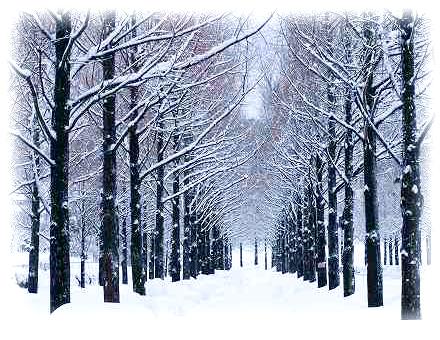 オーダーメイド結婚指輪 雪景色 イメージ 150423-I01
