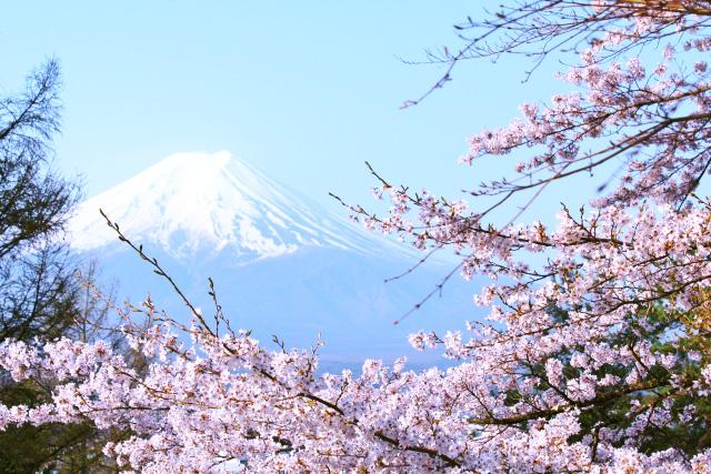 hi170617w1073-i 結婚指輪のモチーフ 富士山 桜