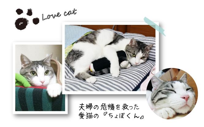 cat_Interview03a