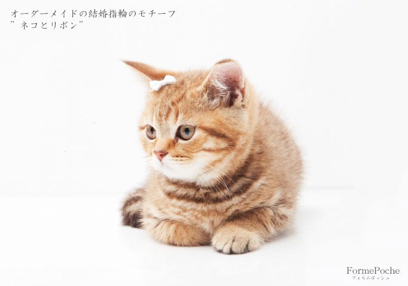 hi180514w1148-4 オーダーメイドの結婚指輪 大阪 猫 リボン ダイヤモンド