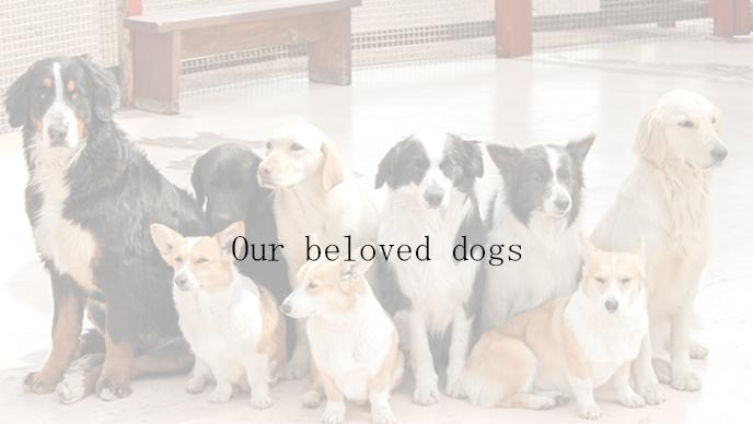 犬の結婚指輪の表紙3