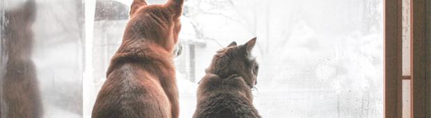 犬と猫 1